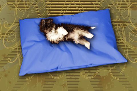 Hundekissen Doggys Flatscreen Blau