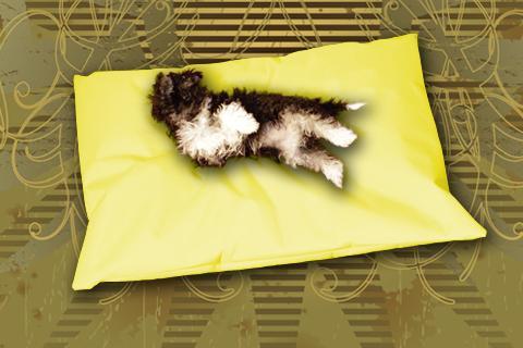 Hundekissen Doggys Flatscreen Gelb