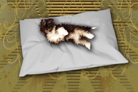 Hundekissen Doggys Flatscreen Grau