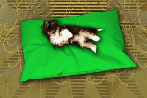 Hundekissen Doggys Flatscreen Grün