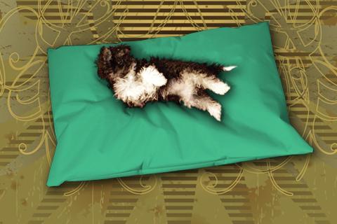 Hundekissen Doggys Flatscreen Minz Grün