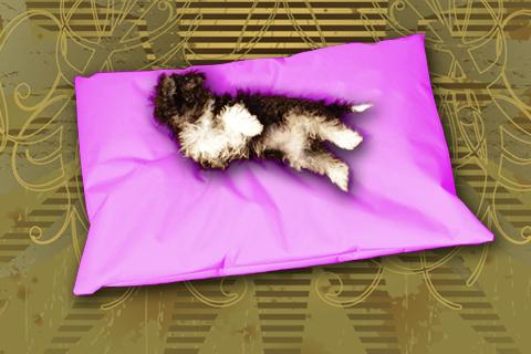 Hundekissen Doggys Flatscreen Pink