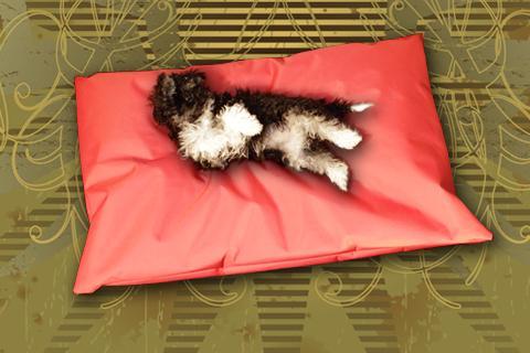 Hundekissen Doggys Flatscreen Rot