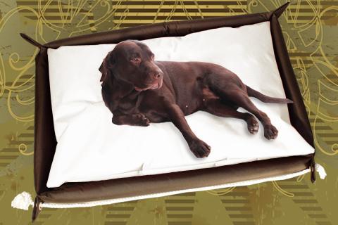 Hundebett inkl. Hundekissen in der Farbe Beige