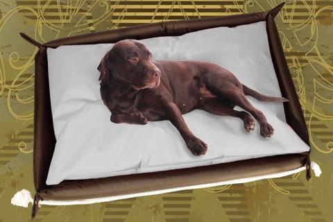 Hundebett inkl. Hundekissen in der Farbe Grau