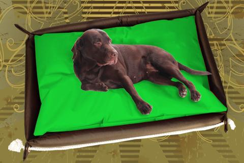 Hundebett inkl. Hundekissen in der Farbe Grün
