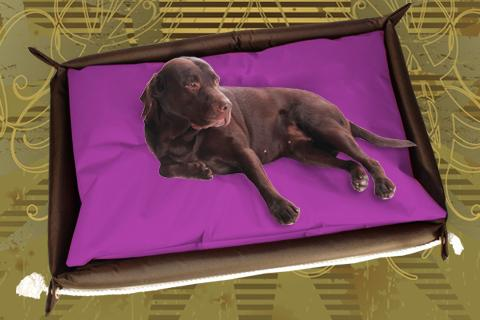 Hundebett inkl. Hundekissen in der Farbe Lila