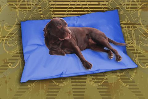 Hundekissen Doggys Flatscreen Blau XXL