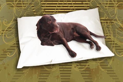Hundekissen Doggys Flatscreen Beige XXL