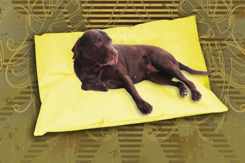 Hundekissen Doggys Flatscreen Gelb XXL