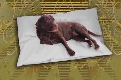Hundekissen Doggys Flatscreen Grau XXL