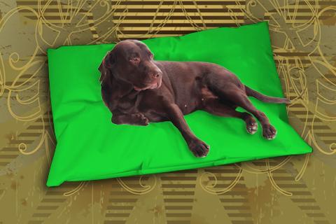 Hundekissen Doggys Flatscreen Grün XXL