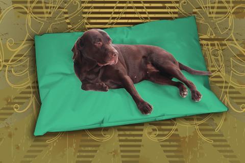 Hundekissen Doggys Flatscreen Minz-grün XXL