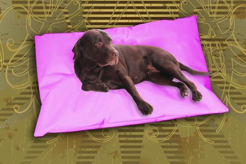 Hundekissen Doggys Flatscreen Pink XXL