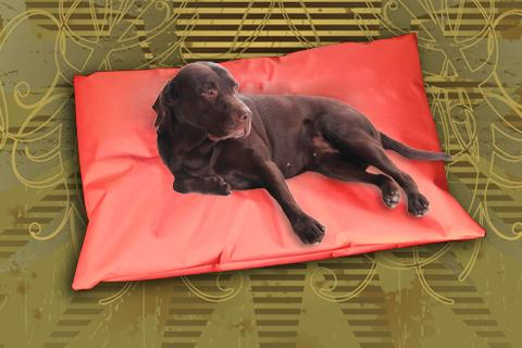 Hundekissen Doggys Flatscreen Rot XXL