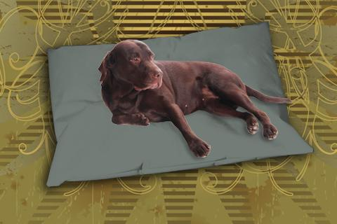 Hundekissen Doggys Flatscreen Sand-Grau XXL