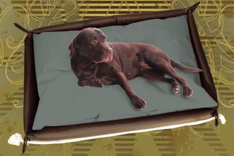 Hundebett inkl. Hundekissen in der Farbe Sand Grau